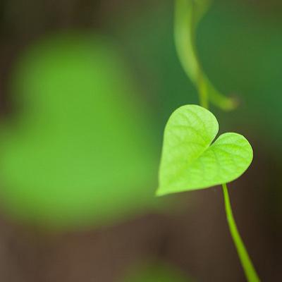 Week 2: Je onderzoekt de vraag: 'Wat als leven het mysterie over liefde is?'